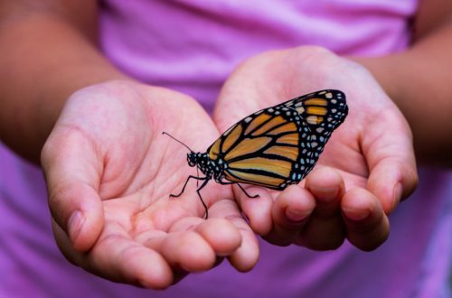 Locating Your Wings: What Butterflies Teach About Our Writing Voices